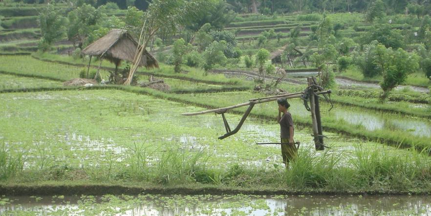 Bali_Header