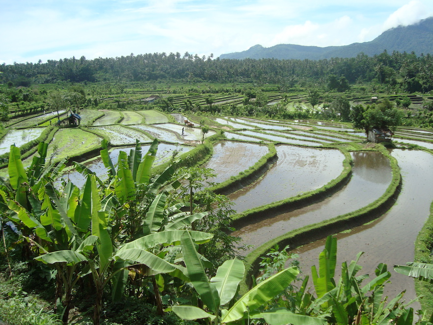 Riziere-Bali