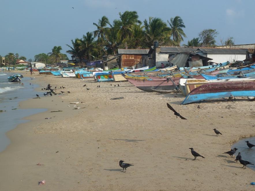Trincomale-Sri Lanka